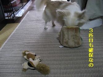 リスのおもちゃ2