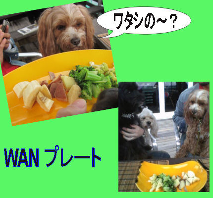 2012.4.15わんぷれーと
