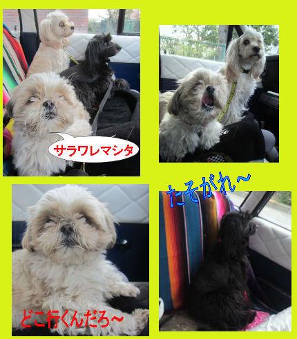 2012.4.19れっつごー
