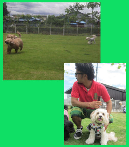 2012.6.10お外ドックラン