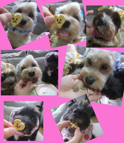 2012.6.22クッキー♪