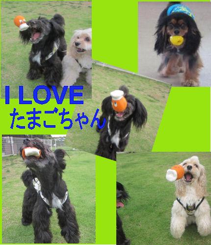 2012.6.24たまごちゃん