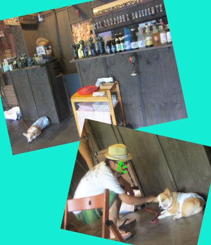 2012.7.15看板犬ちゃん
