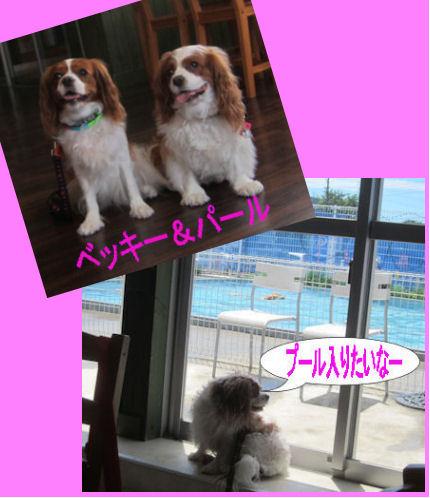 2012.7.16べきぱるちゃん