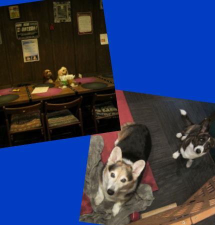 2012.7.22看板犬ちゃん