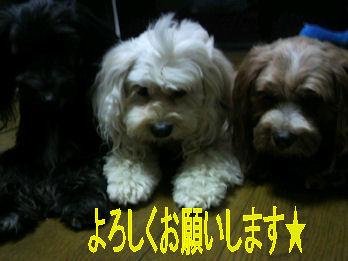 2012.10.3お願いシマス