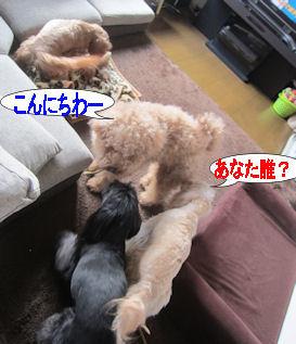 2012.4.18だれ~?