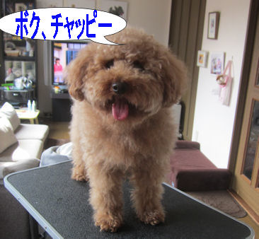 2012.4.18僕チャッピー