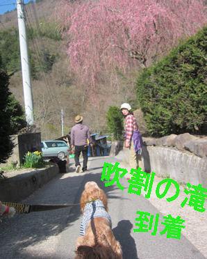 2012.4.29吹き割れの滝