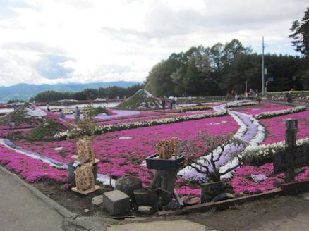 2012.5.4芝さくら