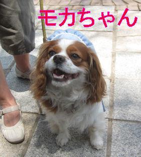 2012.5.5もかちゃん