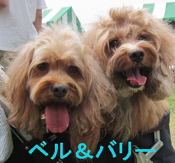 2012.5.20べるばり~