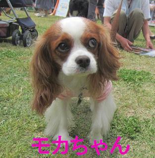 2012.5.20もかちゃん