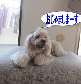 2012.6.7おじゃましまーす