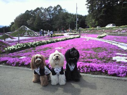2012.5.4芝桜と・・