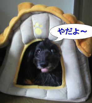 2012.6.1なっちゃんやだよー