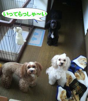 2012.6.13いってらっしゃ~い