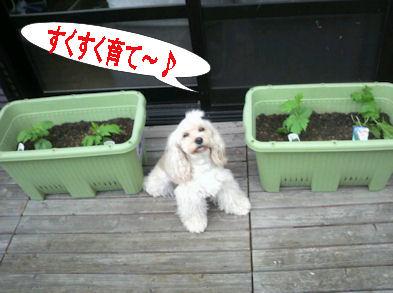 2012.6.15おおきくなーれ