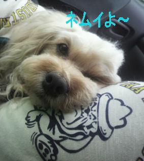 2012.6.17眠いよ~