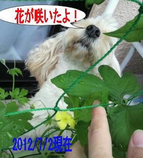 2012.7.1ごーやさん