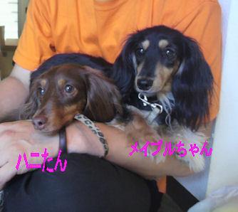 2012.7.17はにぷる