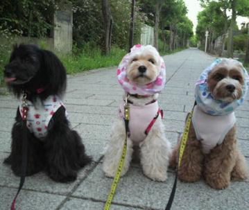 2012.8.23ぁ散歩