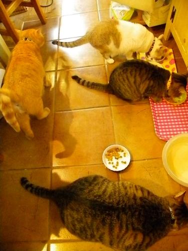 みんなで食事