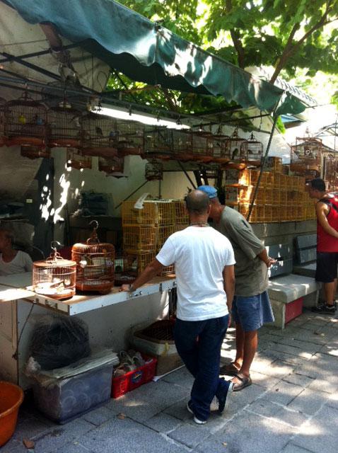 くすり屋さん.comブログ-香港鳥マーケット2