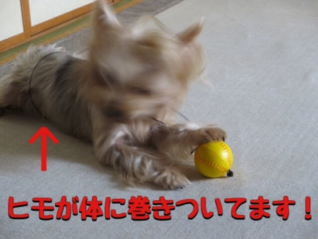201409252148172b9.jpg