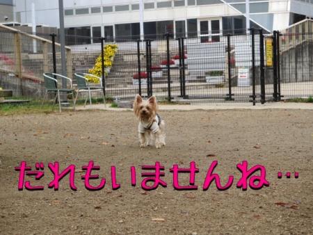 201411092149592c2.jpg