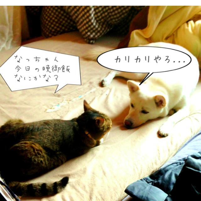 chikokume2.jpg