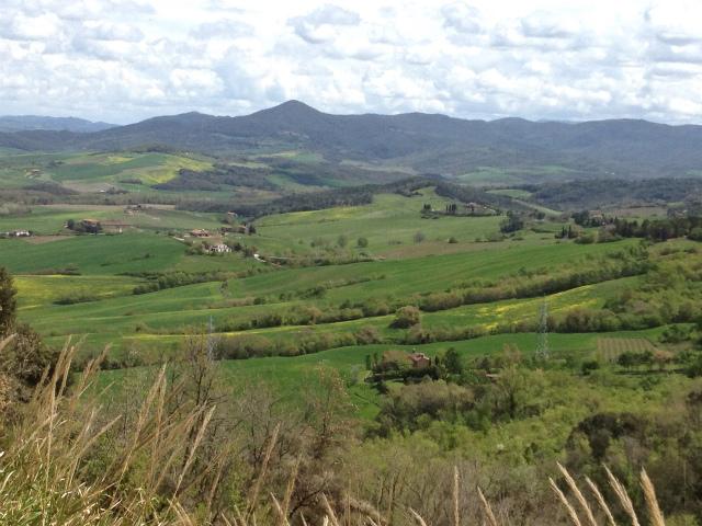 paesaggio Montescudaio