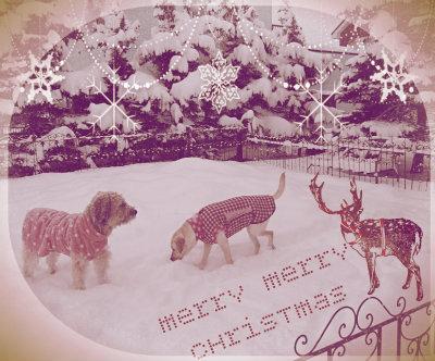 すてきなクリスマスをお迎え下さい♪