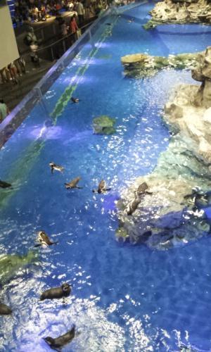 ペンギン水槽