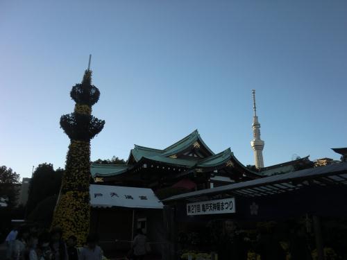亀戸天神菊祭り5