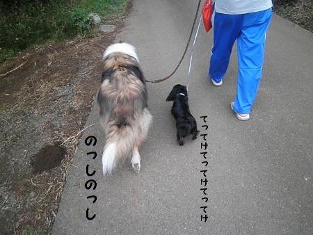 P9220044 (450x338)散歩おやじ