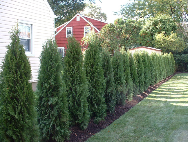 Backyard Privacy Ideas With Plants : Backyard Landscape Designs ? Creating a Natural Privacy Screen