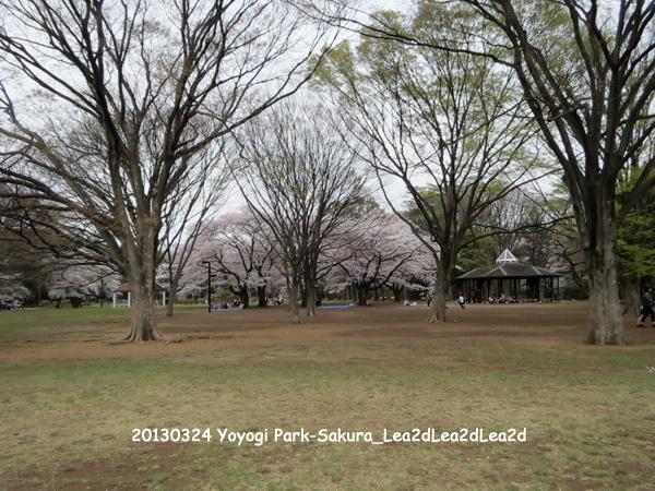 2013年3月 Yoyogi Park - Sakura