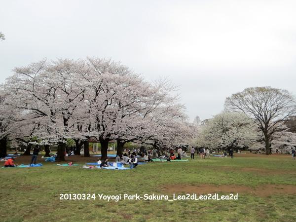 2013年 Yoyogi Park - Sakura