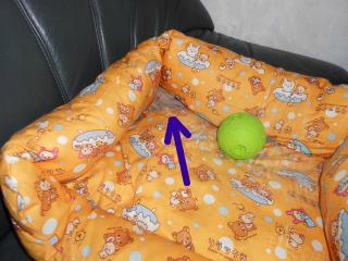snap_leaf20080808_2012116174824.jpg