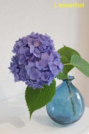 紫陽花と橋村大作さんのガラスの花器