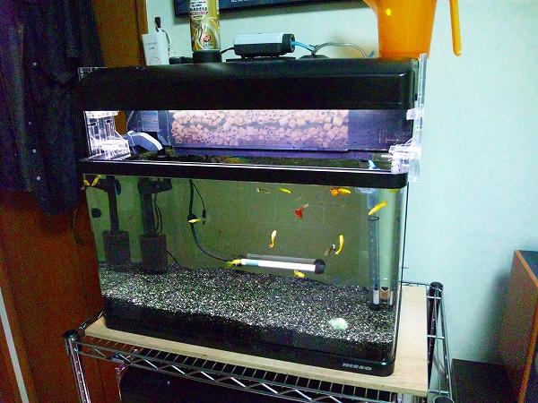 熱帯魚 上段水槽 20120630