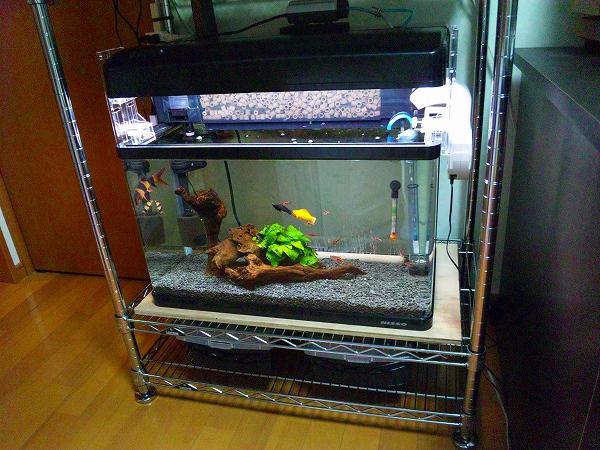 熱帯魚を 下段水槽 20120630