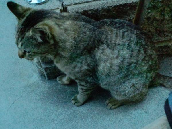 おむかい猫1