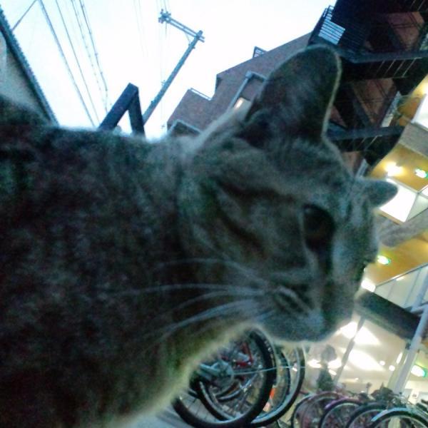 おむかい猫2