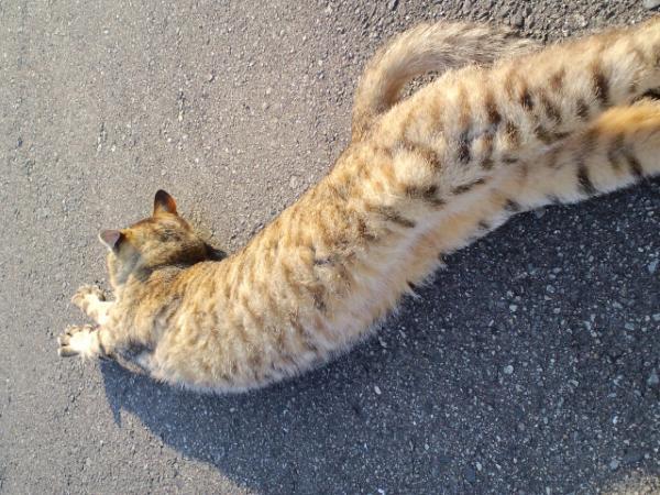 おむかい猫12