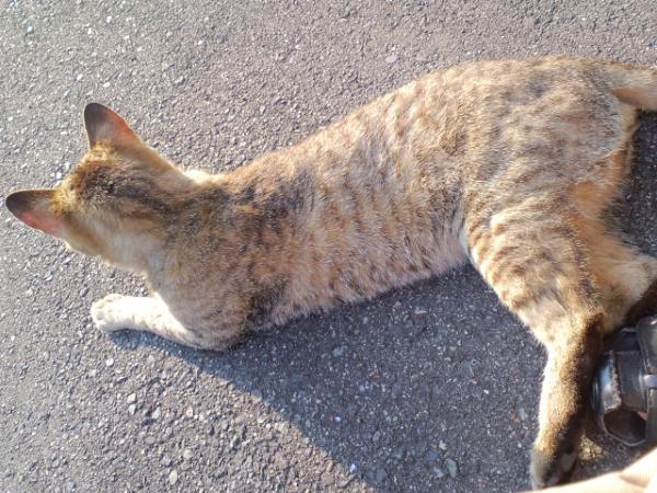 おむかい猫11