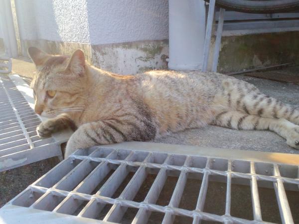 おむかい猫8