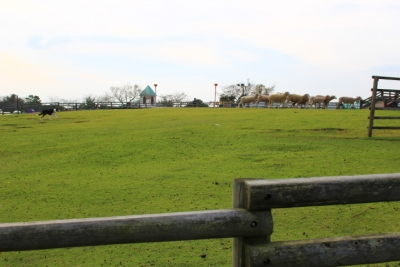 motherfarm8.jpg