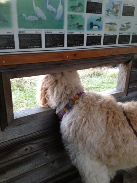 長浜野鳥観察の窓